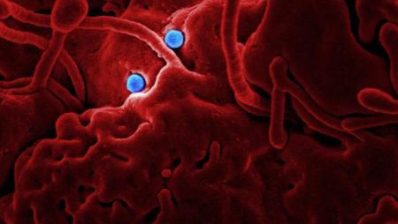 Holistic Protection from the Coronavirus