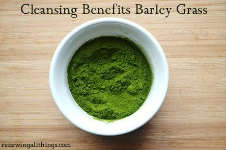 barley-grass greens powder