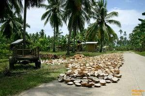 virgin-coconut-oil-Philippines