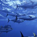wild-caught-seafood